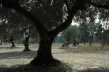 Massimo DE GENNARO | LA DANZA DEGLI ULIVI